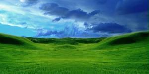 green-grass-field-5