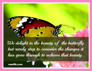 butterfly.newlife